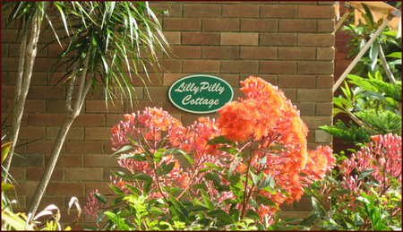 Lillypilly - Accommodation Perth