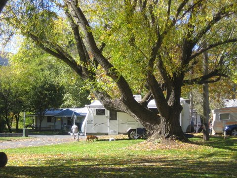 Tumbarumba Creek Caravan Park - Accommodation Perth