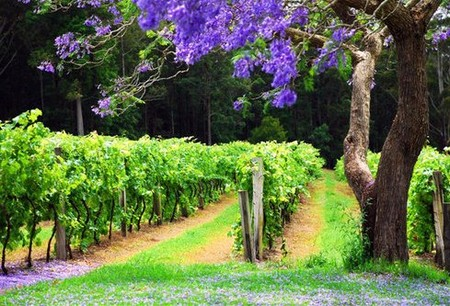 Bago Vineyards - Accommodation Perth