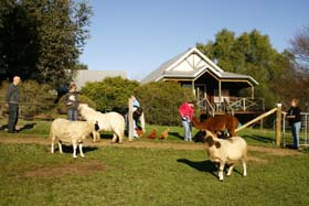Sunnyhurst Chalets - Accommodation Perth