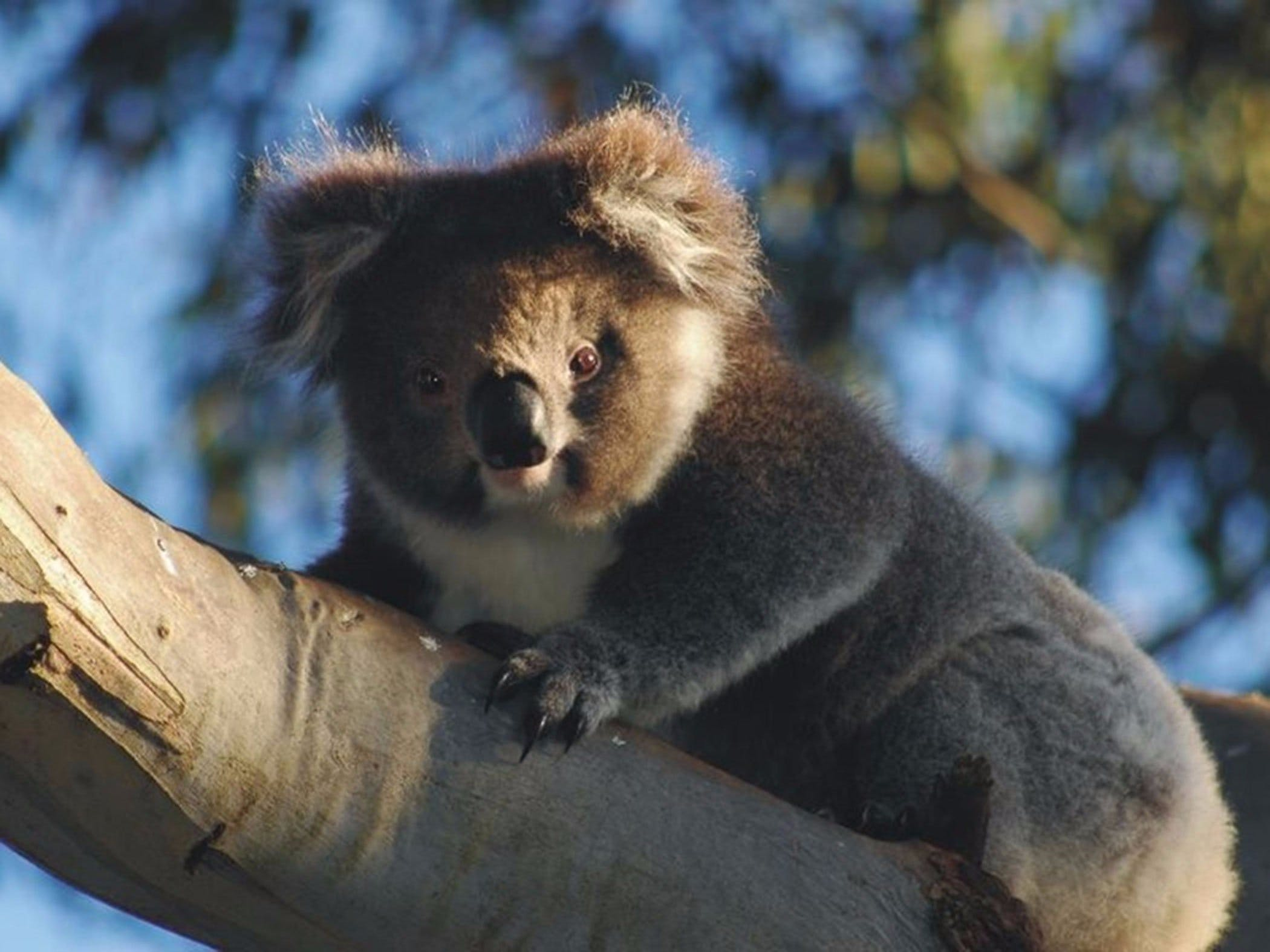 Bimbi Park Camping Under Koalas - Accommodation Perth