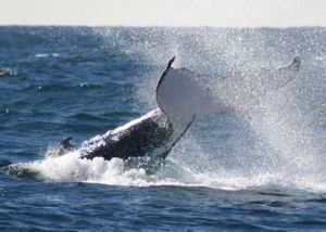 Whale Watching Sydney - Accommodation Perth
