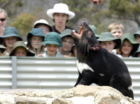 Tasmania Zoo - Accommodation Perth