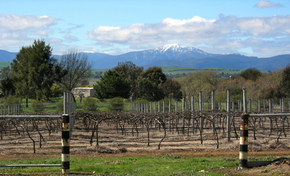 Buller View Wines - Accommodation Perth