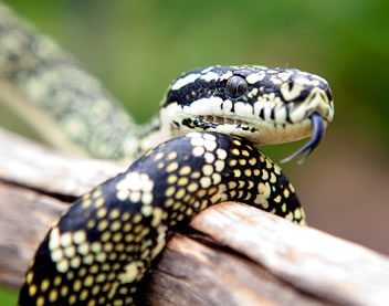 Reptile Encounters - Accommodation Perth