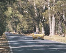 Ludlow Tuart Forest - Accommodation Perth