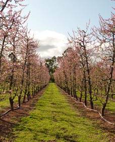Raeburn Orchards - Accommodation Perth