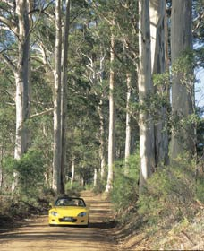 Mount Shadforth Scenic Drive - Accommodation Perth