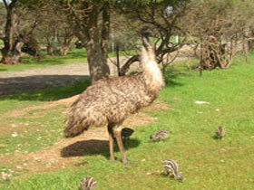 Minlaton Fauna Park - Accommodation Perth