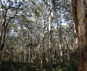 Boranup Karri Forest - Accommodation Perth
