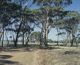 Lake Dumbleyung - Accommodation Perth