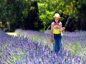 Brayfield Park Lavender Farm - Accommodation Perth