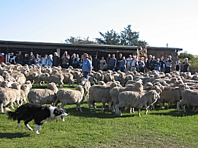 Curringa Farm - Accommodation and Farm Tours - Accommodation Perth