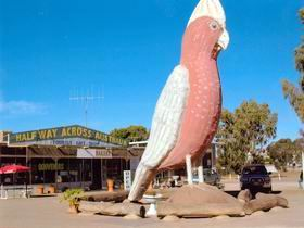The Big Galah - Accommodation Perth