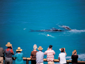 Whale Watching At Head Of Bight - Accommodation Perth