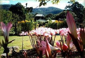 Blueberry Cottage Open Gardens - Accommodation Perth