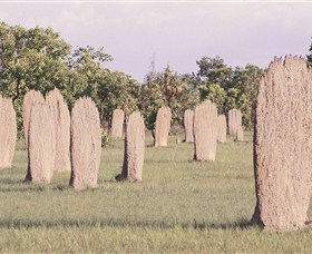 Magnetic Termite Mounds - Accommodation Perth