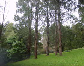 Mount Dandenong Arboretum - Accommodation Perth