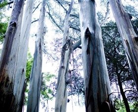 Dandenong Ranges National Park - Accommodation Perth