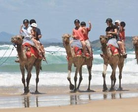 Camel Rides with Coffs Coast Camels - Accommodation Perth