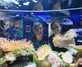 Solitary Islands Aquarium - Accommodation Perth