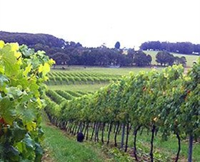 Banjo's Run Winery and Vineyard - Accommodation Perth