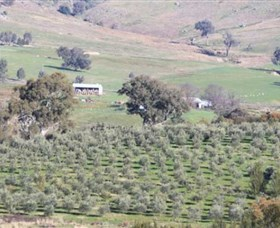 Wymah Organic Olives and Lambs - Accommodation Perth