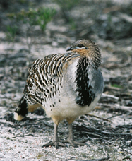 Yongergnow Australian Malleefowl Centre - Accommodation Perth