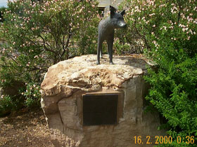 Dingo Statue - Accommodation Perth