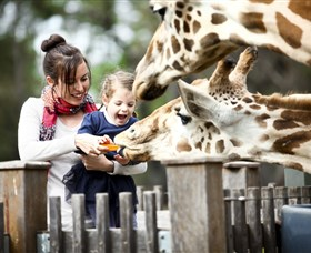 Taronga Western Plains Zoo Dubbo - Accommodation Perth