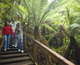 Otway Fly Treetop Adventures - Accommodation Perth