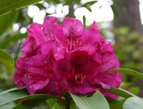 Campbell Rhododendron Gardens - Accommodation Perth