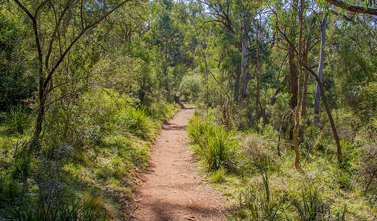 Mares Forest Creek walking track - Accommodation Perth