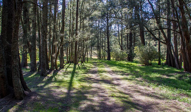Wombeyan Waterfall walking track - Accommodation Perth