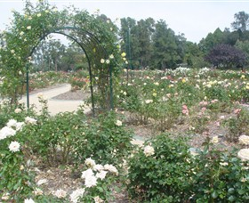 Victoria Park Rose Garden - Accommodation Perth
