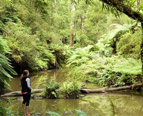 Morwell National Park - Accommodation Perth