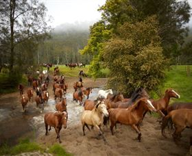 Glenworth Valley Horse Riding - Accommodation Perth