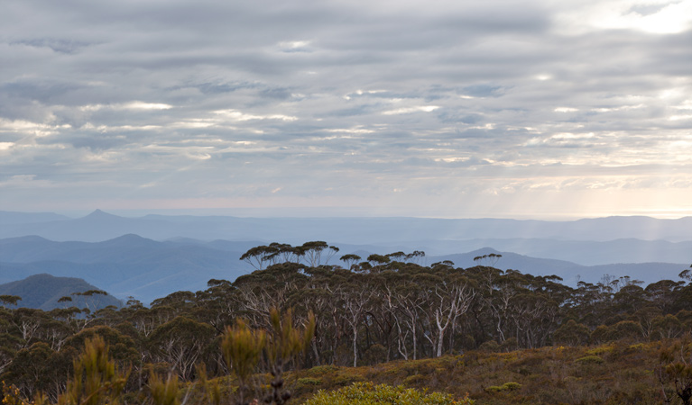 Mount Budawang trail - Accommodation Perth