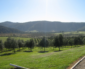 Hastings Valley Olives - Accommodation Perth