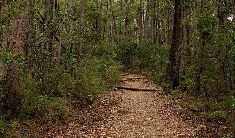 Pigeon House Mountain Didthul walking track - Accommodation Perth