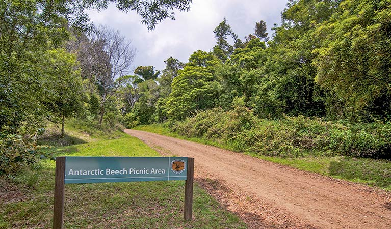 Antarctic Beech picnic area - Accommodation Perth