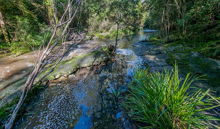 Dawson River walking track - Accommodation Perth
