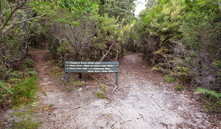 Angophora grove walking track - Accommodation Perth