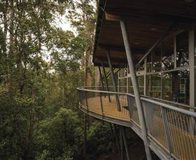 Tarkine Forest Adventures - Dismal Swamp - Accommodation Perth