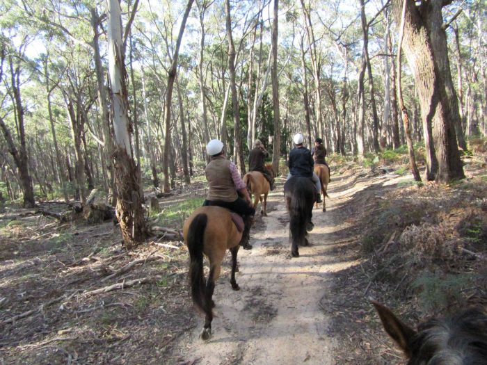 Silver Brumby Trails - Accommodation Perth