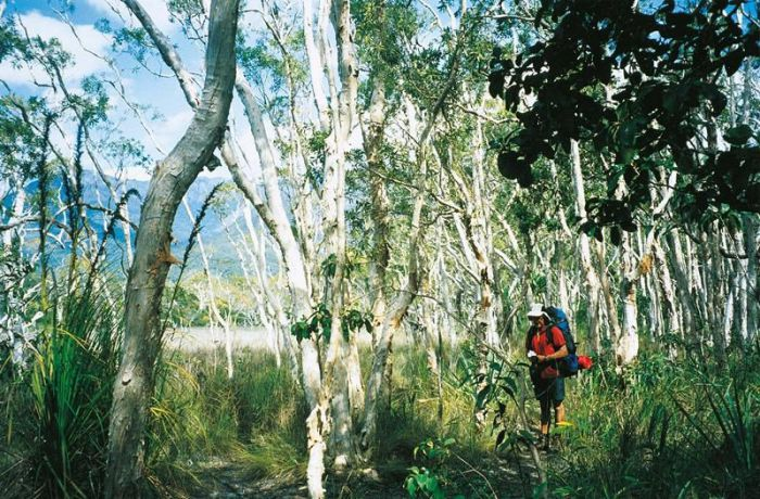 Thorsborne Trail Hinchinbrook Island National Park - Accommodation Perth