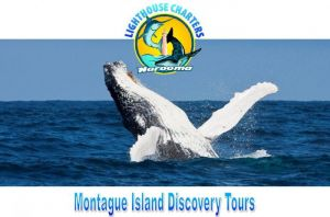 Lighthouse Charters Narooma - Accommodation Perth