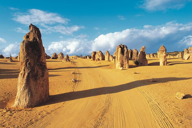 Pinnacles Desert Koalas and Sandboarding 4WD Day Tour from Perth - Accommodation Perth