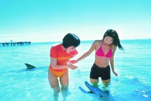 Monkey Mia Dolphins  Shark Bay Air Tour From Perth - Accommodation Perth
