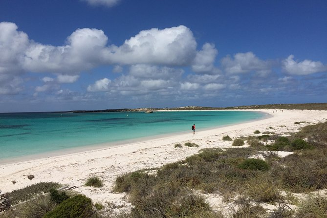 Abrolhos Island Half Day Fly and Flipper - Accommodation Perth